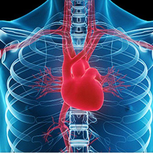 ecocardiogramma ecg
